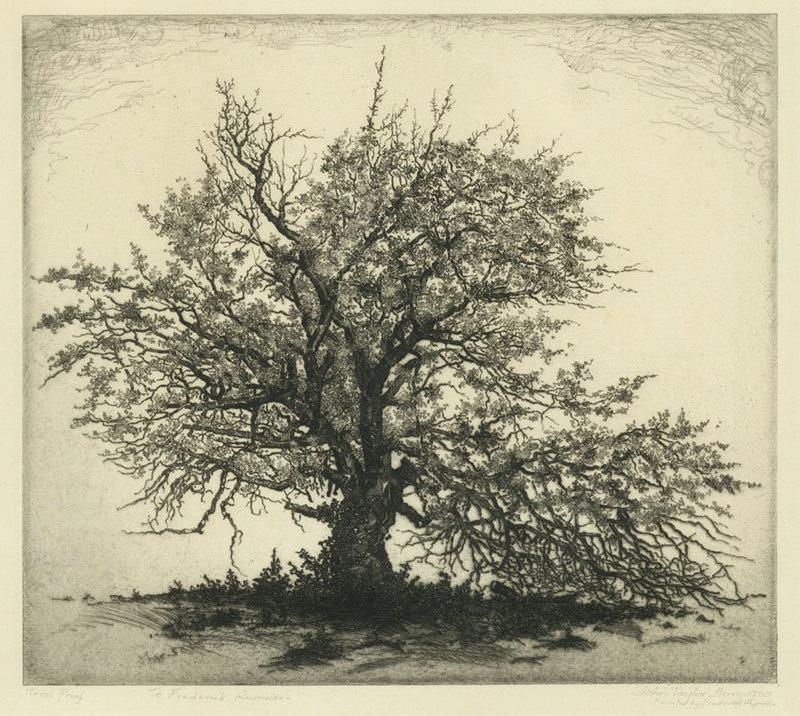 Tree Etching Royalty Free Stock Photos - Image: 24968018